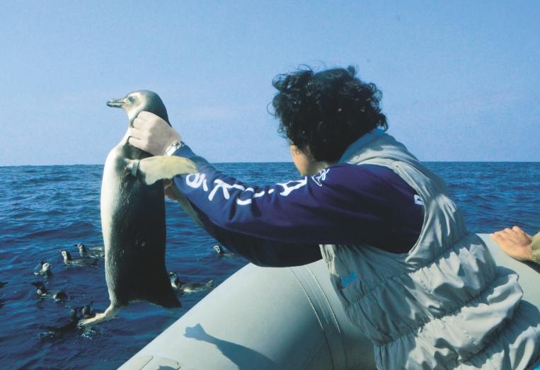 2015_pinguins_002